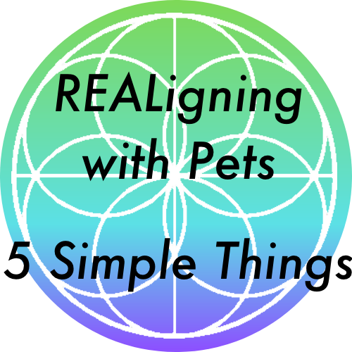 5 Simple things to help align with your pet